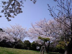 201104D01.jpg